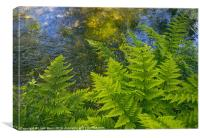 Ferns growing beside a river., Canvas Print
