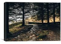 Stone path in woodland at Blea Tarn.
