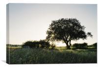 Setting sun behind a remote tree., Canvas Print