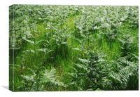 Wild bracken growing in grassland., Canvas Print