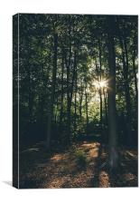 Sunset through dense deciduous woodland., Canvas Print