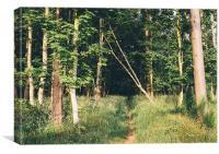 Path entering deciduous woodland., Canvas Print