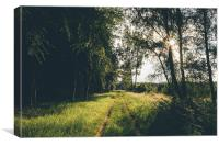 Sunset light over forestry track., Canvas Print