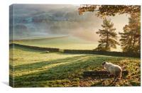 Sheep in fog at sunrise. Troutbeck, Cumbria, UK.