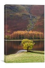 Autumnal colour. Buttermere, Cumbria, UK.