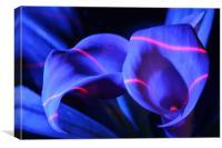 Zantedeschia - Electric blue, Canvas Print