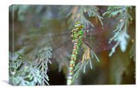 Green/brown dragonfly 2