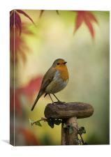 ROBIN AND ACER, Canvas Print