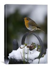 ROBIN ON OLD KETTLE, Canvas Print