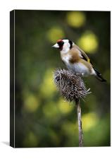 GOLDFINCH #1, Canvas Print