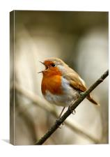 ROBIN IN FULL SONG, Canvas Print