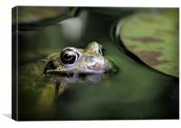 COMMON FROG, Canvas Print