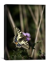 SWALLOWTAIL BUTTERFLY, Canvas Print