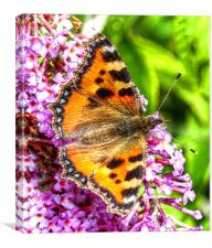 The Small Tortoiseshell Butterfly, Canvas Print