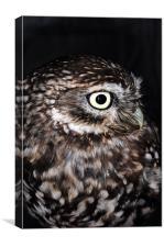 The Little Owl, Canvas Print