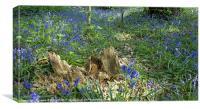 Bluebell carpet, Canvas Print