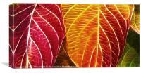 Autumn colour range fractal
