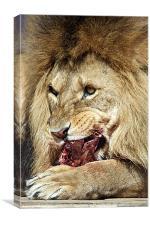 Lion feast, Canvas Print