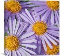 Lilac Floral Splash, Canvas Print
