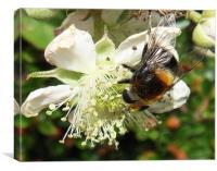 Bee & brambles, Canvas Print