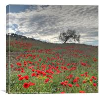 Axarquia Poppies, Canvas Print