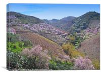 Almond Blossom Valley, Canvas Print
