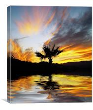Washingtonia Sunset, Canvas Print