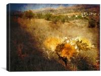 Dried Thistles, Canvas Print