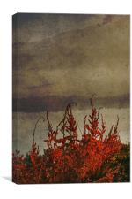 Dying weeds, Canvas Print