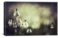 Snowdrops in sunshine, Canvas Print