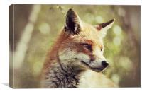 Foxy - Red Fox, Canvas Print