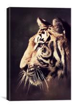 The Stare - Tiger, Canvas Print