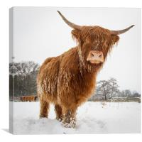 Horny cow, Canvas Print