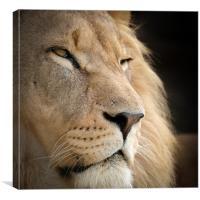 Proud Lion, Canvas Print