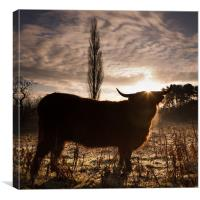 Highland cow sunrise, Canvas Print