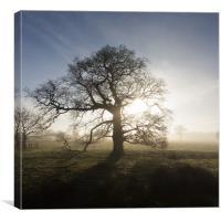 Winter Tree, Canvas Print
