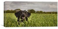 Happy Labrador, Canvas Print