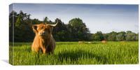 Highland Cows, Canvas Print