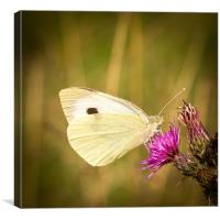 Summer Meadows - Large White, Canvas Print