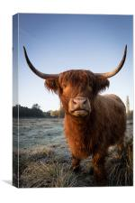 Highland Cow in Frost, Canvas Print