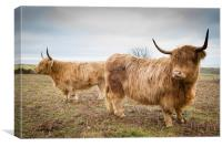 Coastal Coos, Canvas Print