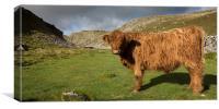 Yorkshire Highland, Canvas Print