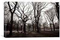 Central Park New York, Canvas Print