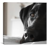 Long Day - Black Lab, Canvas Print
