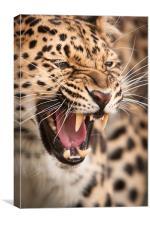 The Snarler - Amur Leopard, Canvas Print