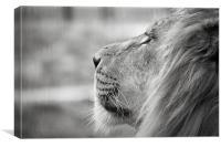 Leo - Lion Profile, Canvas Print