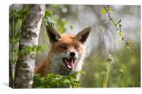 Angry like a fox, Canvas Print