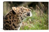 Suncatcher - Amur leopard, Canvas Print