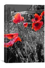 Wild Poppies, Canvas Print