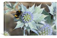 Bee And The Sea Holly, Canvas Print